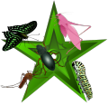 Infested barnstar.png